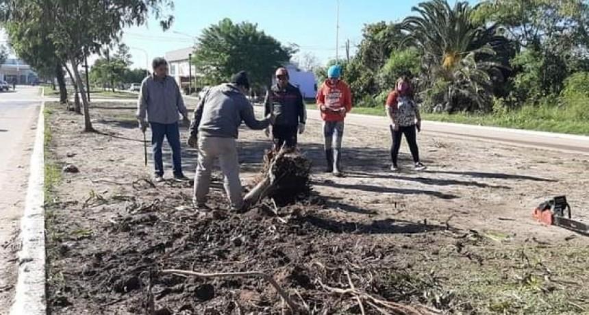 EL MUNICIPIO REEMPLAZARÁ LOS ÁRBOLES CAÍDOS EN LA TORMENTA POR NUEVOS EJEMPLARES